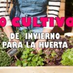 10 CULTIVOS QUE PUEDES SEMBRAR EN LA EPOCA DE INVIERNO
