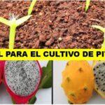 [PDF] MANUAL PARA EL CULTIVO DE PITAHAYA → ¡Gratis!